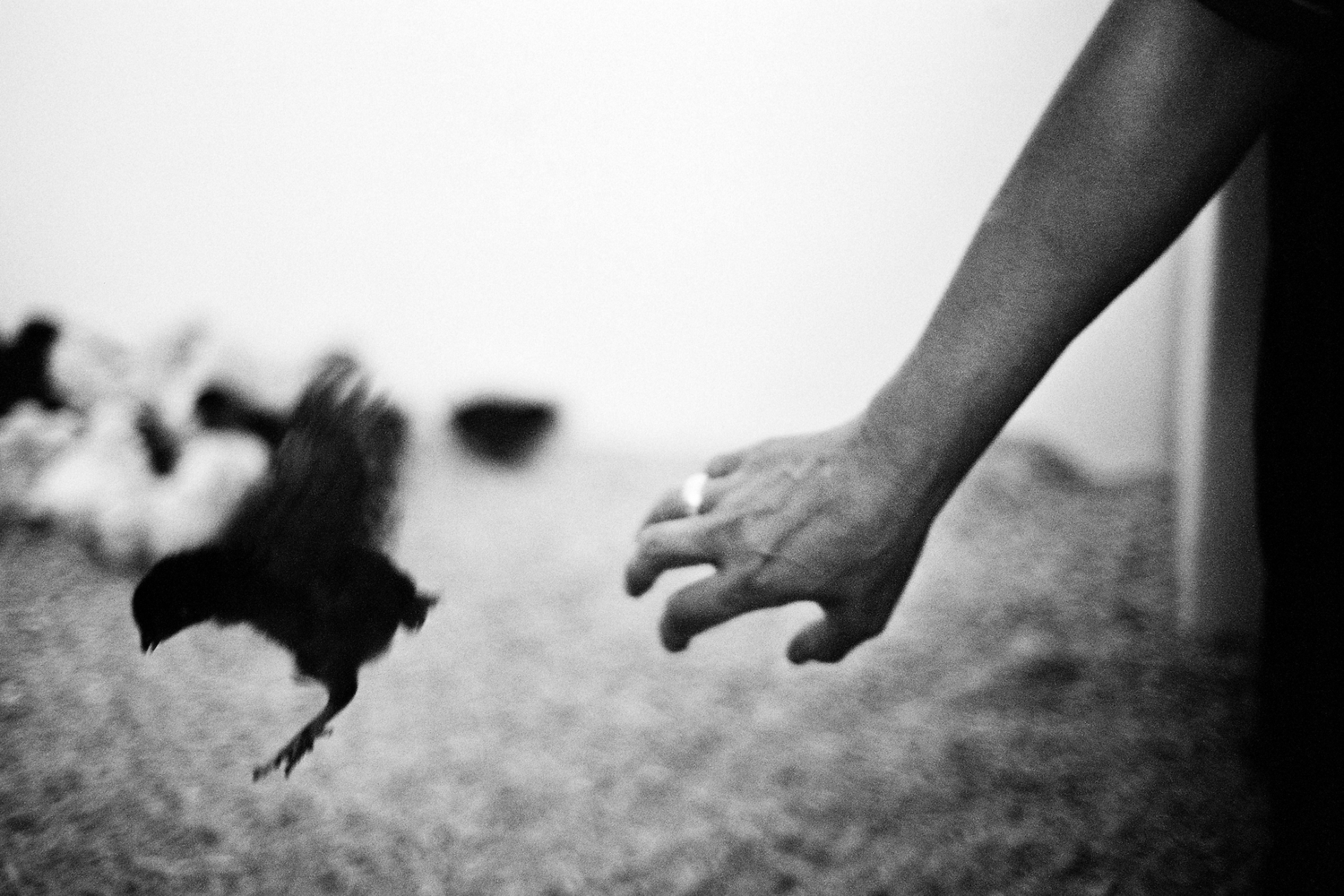 hand reaching out for a black bird